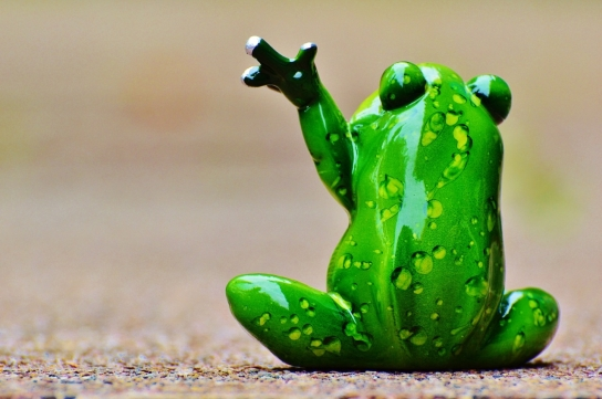 Frog waving